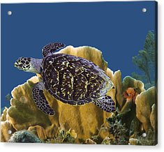 Acrylic Print featuring the photograph The Sea Turtle by Paula Porterfield-Izzo