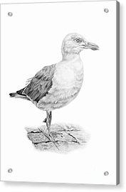 The Seagull Strut Acrylic Print