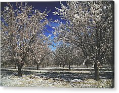 The Season Of Us Acrylic Print by Laurie Search