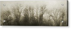 The Secrets Of The Trees Acrylic Print by Scott Norris