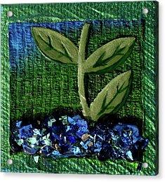 The Seedling Acrylic Print