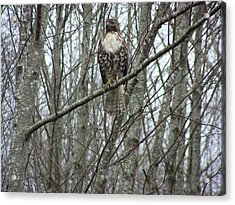 The Sentinel Acrylic Print by Laurie Kidd