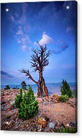 The Sentinel Still Stands Acrylic Print by Dan Holmes