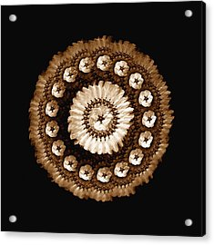 The Sepia Feather And Beadwork Of Flower Acrylic Print by Jacqueline Migell