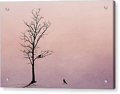 The Serenade Acrylic Print