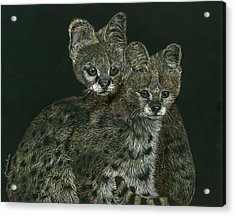 The Serval Twins Acrylic Print by Jessica Kale