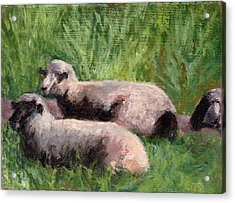 The Sheep Are Resting Acrylic Print by Chris Neil Smith