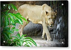 The Shower Acrylic Print by Judy Kay