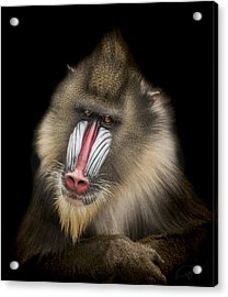 The Shrink Acrylic Print by Paul Neville