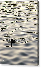 The Simple Life Acrylic Print by Alex Lapidus