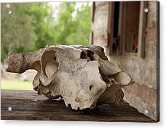 The Skull Acrylic Print