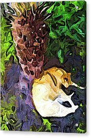 The Sleeping Cat And The Dead Tree Fern Acrylic Print