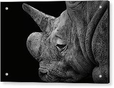 The Sleepy Rhino Acrylic Print