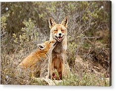 The Smiling Vixen And The Happy Kit Acrylic Print