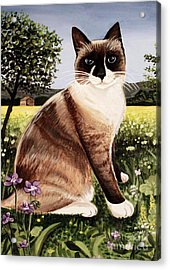 The Snowshoe Cat Acrylic Print by Elizabeth Robinette Tyndall
