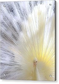 The Softer Side Of White Acrylic Print