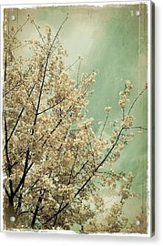 The Softness Of Spring Acrylic Print