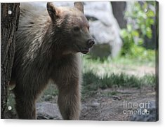 The Spirit Bear Acrylic Print