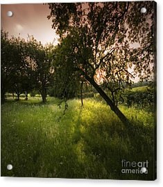 The Spring Orchard Acrylic Print by Angel Ciesniarska