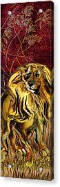 The Squinting Lion Acrylic Print by Anne Weirich