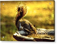 The Squirrel Acrylic Print
