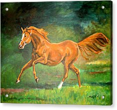 The Stallion-horse Art Painting  Acrylic Print