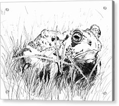 The Stalwart Old Toad Acrylic Print