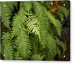 The Standout Fern Acrylic Print