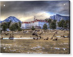 The Stanley With Elk Acrylic Print