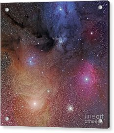 The Starforming Region Of Rho Ophiuchus Acrylic Print by Phillip Jones