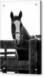 The Steed Acrylic Print by Wayne Stacy