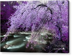 The Stream's Healing Rhythm Acrylic Print by Michael Eingle