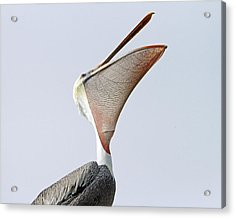The Stretch  Acrylic Print by Shoal Hollingsworth