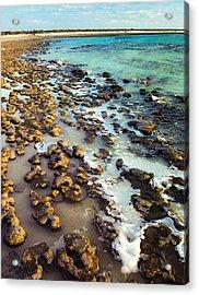 The Stromatolite Family Enjoying Its 1277500000000th Sunset Acrylic Print