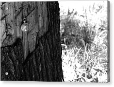 Acrylic Print featuring the photograph The Stump Of Time by Don Youngclaus