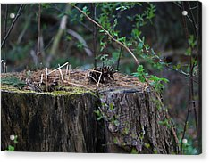 The Stump Acrylic Print