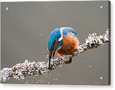 Acrylic Print featuring the photograph The Stunning Common Kingfisher by Phil Stone