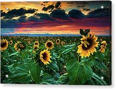 The Summer Winds Acrylic Print by John De Bord