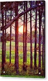 Acrylic Print featuring the photograph The Sun Pines Away by Jan Amiss Photography
