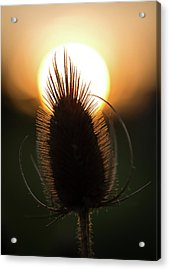 Acrylic Print featuring the photograph The Sun Sets Upon Summer by Dale Kincaid