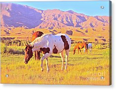 'the Sundowners' Acrylic Print