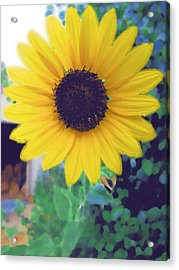 The Sunflower Acrylic Print by Chuck Shafer