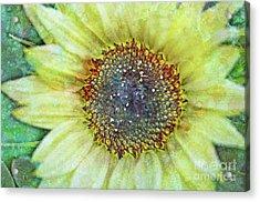 The Sunflower Acrylic Print by Tara Turner