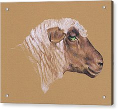 The Surly Sheep Acrylic Print by Richard Mountford