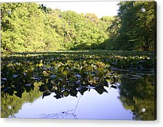 The Swamp Acrylic Print by Dennis Curry