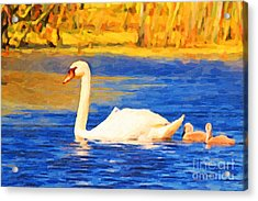 The Swan Family . Photoart Acrylic Print by Wingsdomain Art and Photography