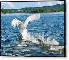 The Swan Runs Acrylic Print