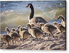 The Swimming Lesson Acrylic Print by Albert Seger