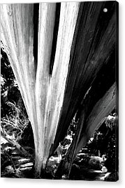 Acrylic Print featuring the photograph The Swoop Of Fallen Wood by Lorraine Devon Wilke