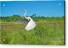 The Take Off Acrylic Print